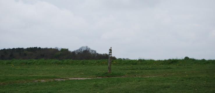 A wheatear drops in