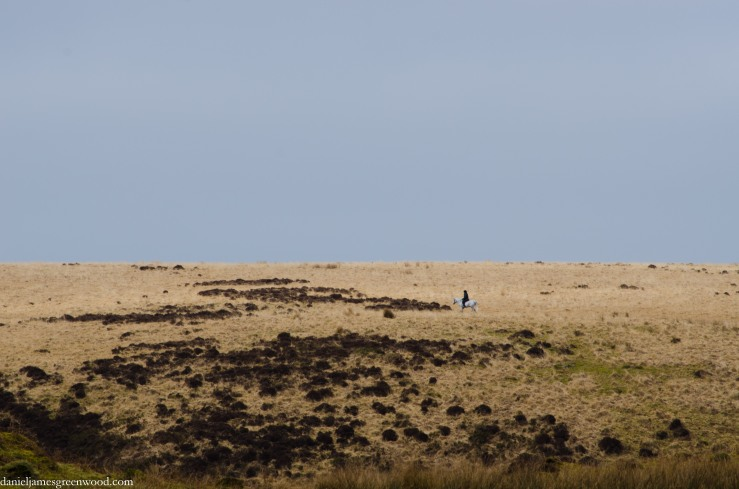 Horse on the moor