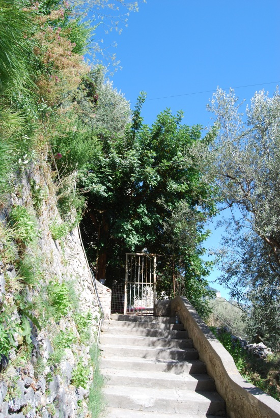 Positano's first wildlife conservation corridor/stairwell