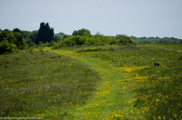 Farthing Downs in June 1