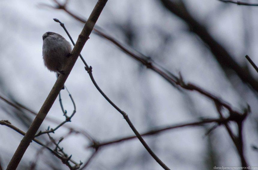 Blog birds -1