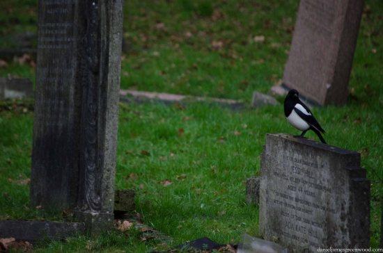 Blog birds -2