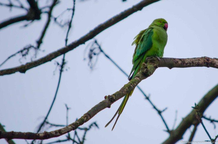 Blog birds -3