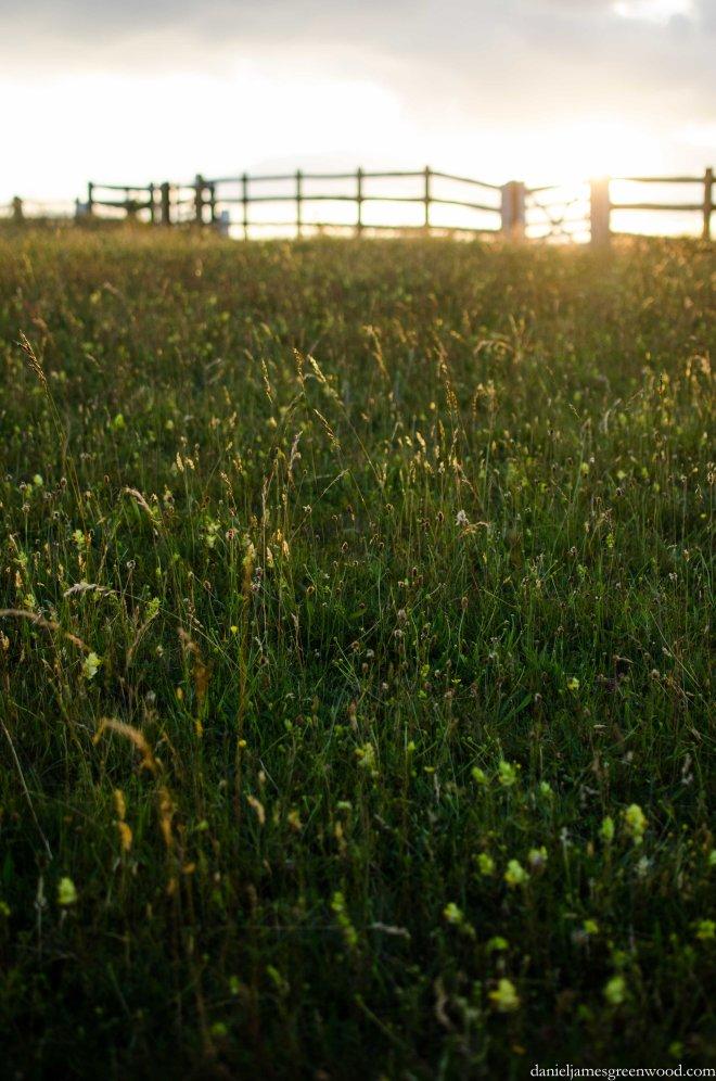 Evening meadows
