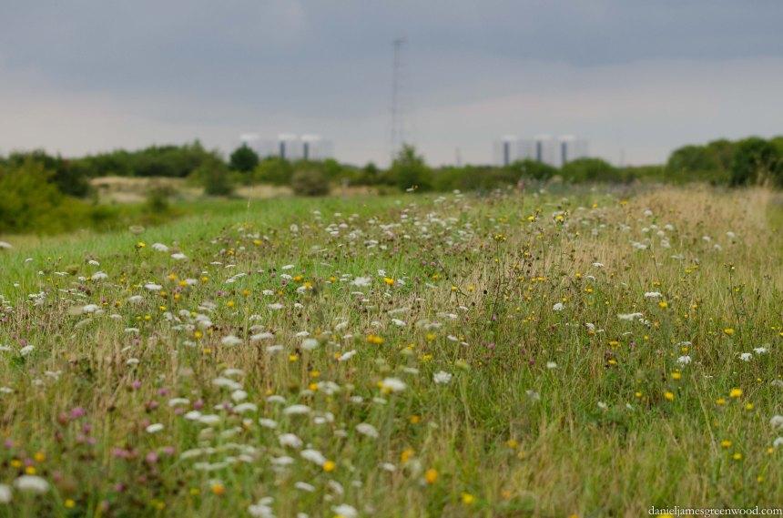 Swanscombe Marshes - 16-8-15 blog pics-13