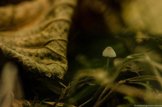 Fungi 2015 blog pics-1