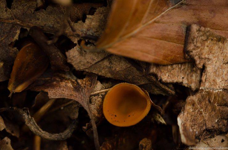 Fungi 2015 blog pics-3