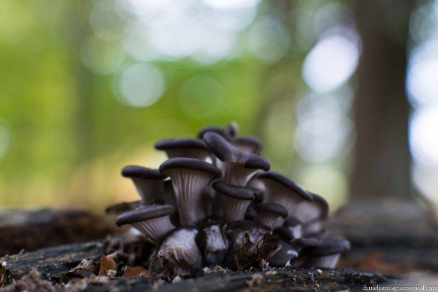 Fungi 2015 blog pics-4