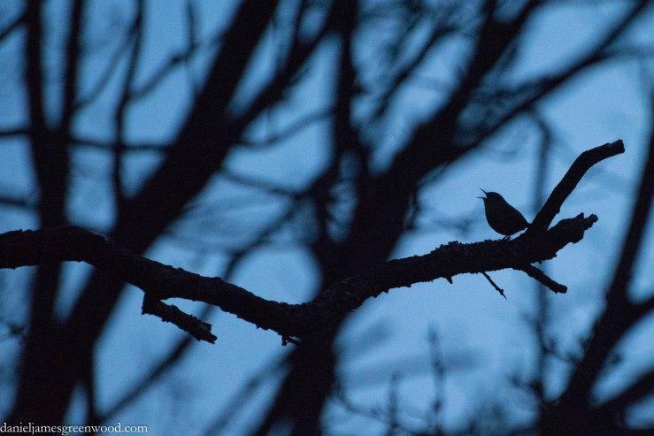 One Tree Hill dawn-1