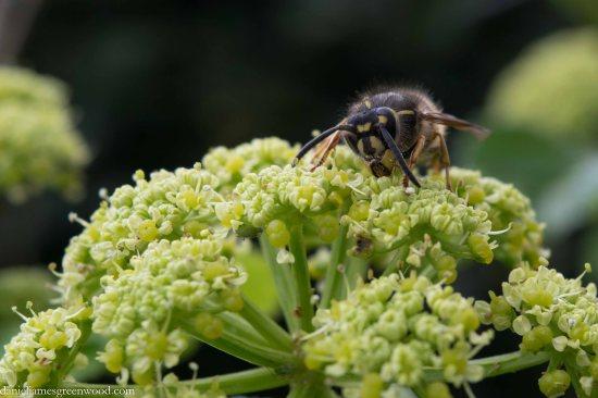 Queen wasp-1