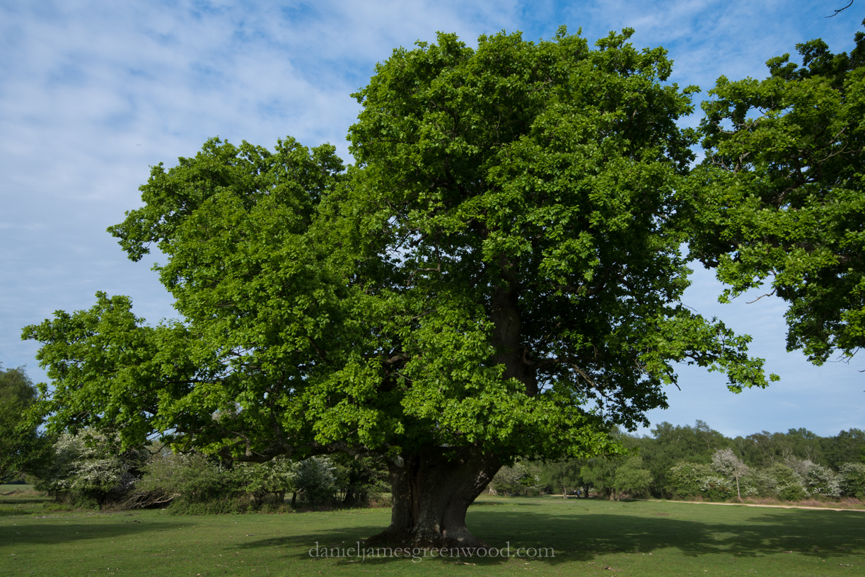 New Forest 20-5-2016 blog-29