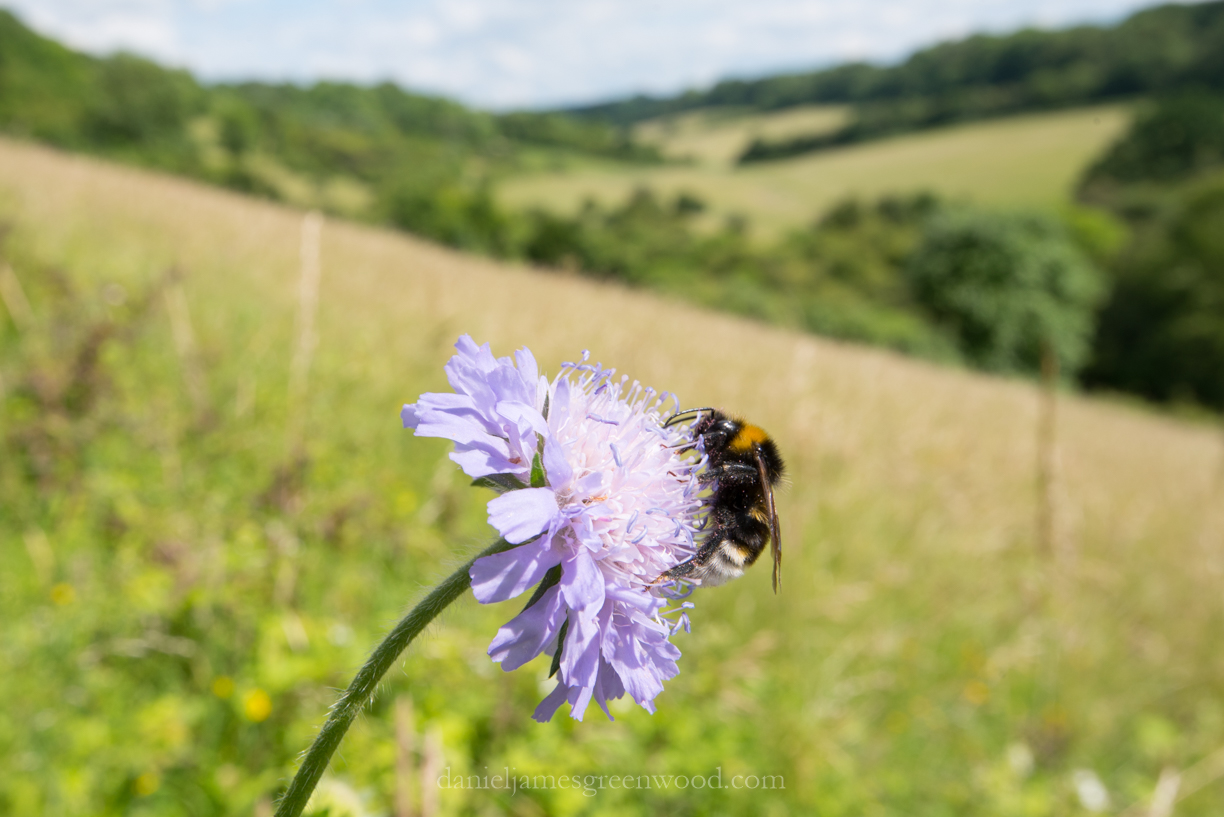 North Downs diary June 2016-8301