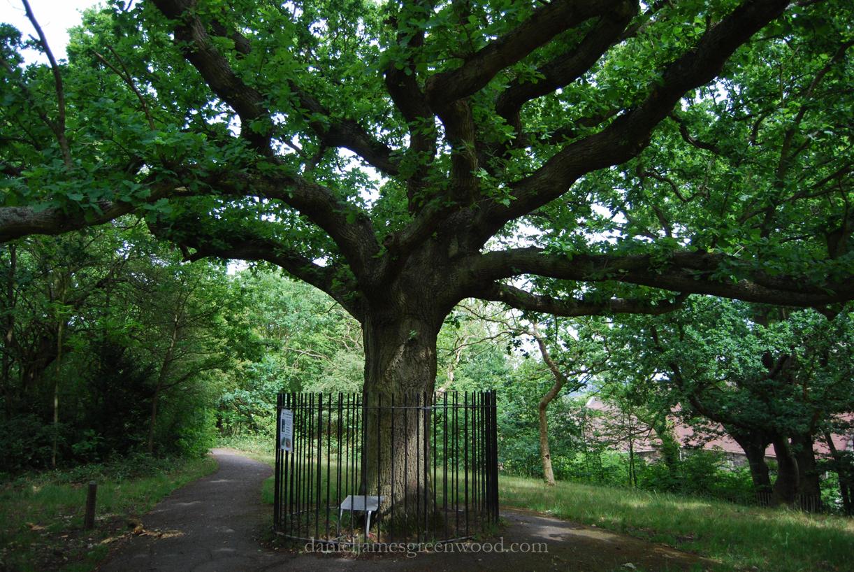 OTH oaks-1