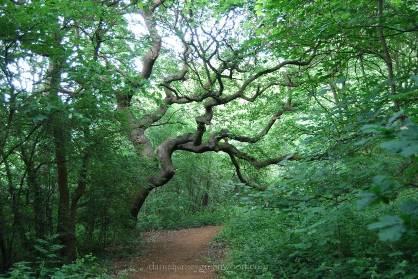 OTH oaks-3