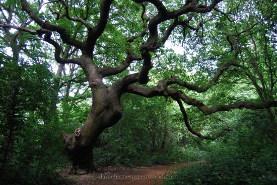 OTH oaks-5