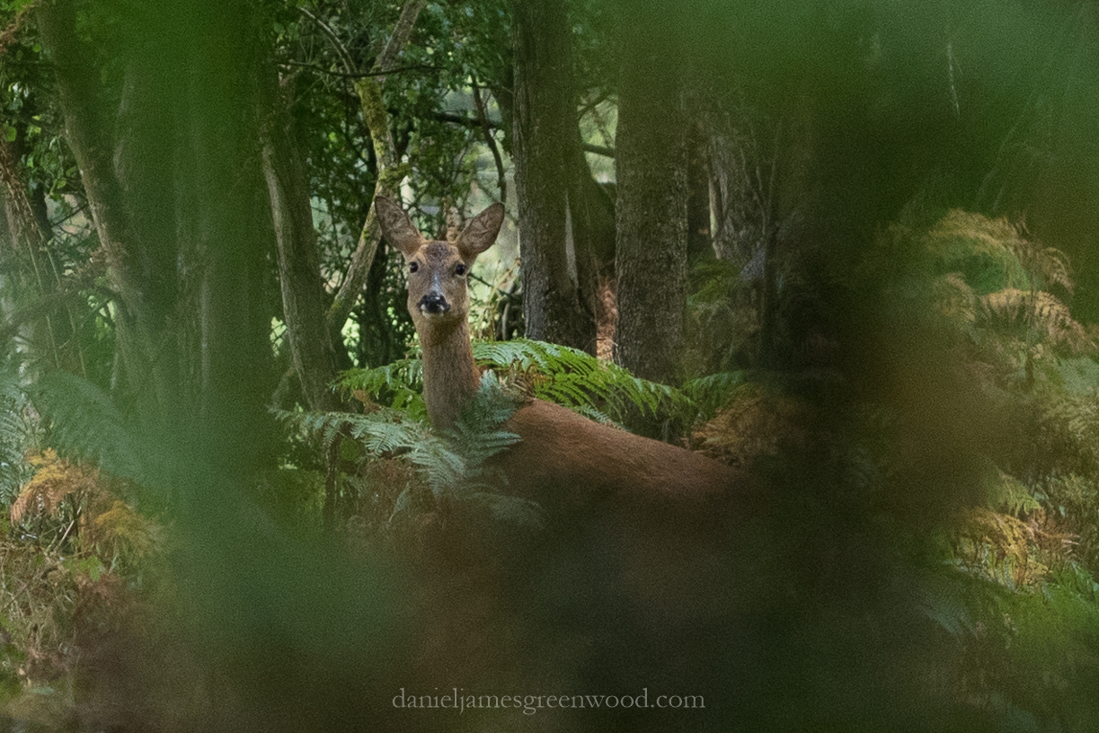 New Forest September 2016 lo-res-12