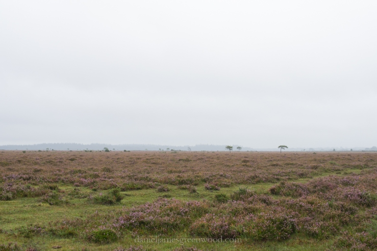 New Forest September 2016 lo-res-32