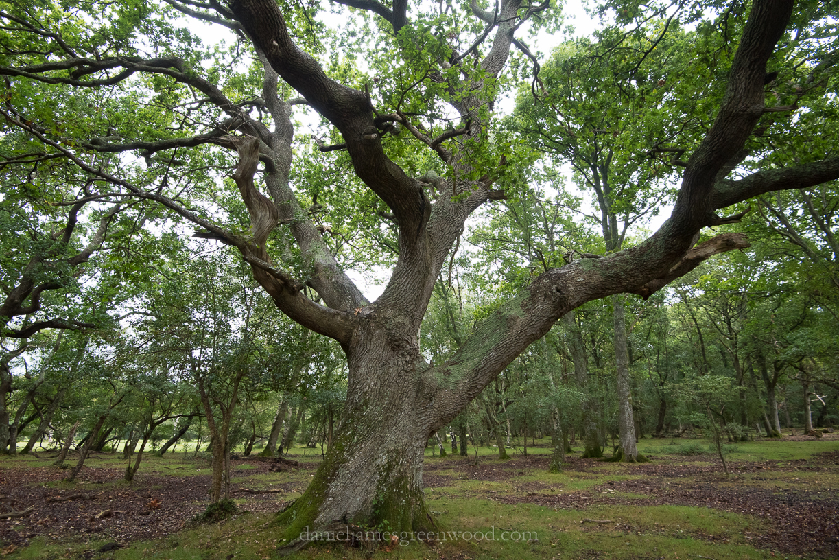 New Forest September 2016 lo-res-56