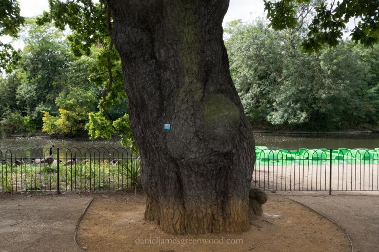 dulwich-park-oaks-22-8-16-lo-res-19
