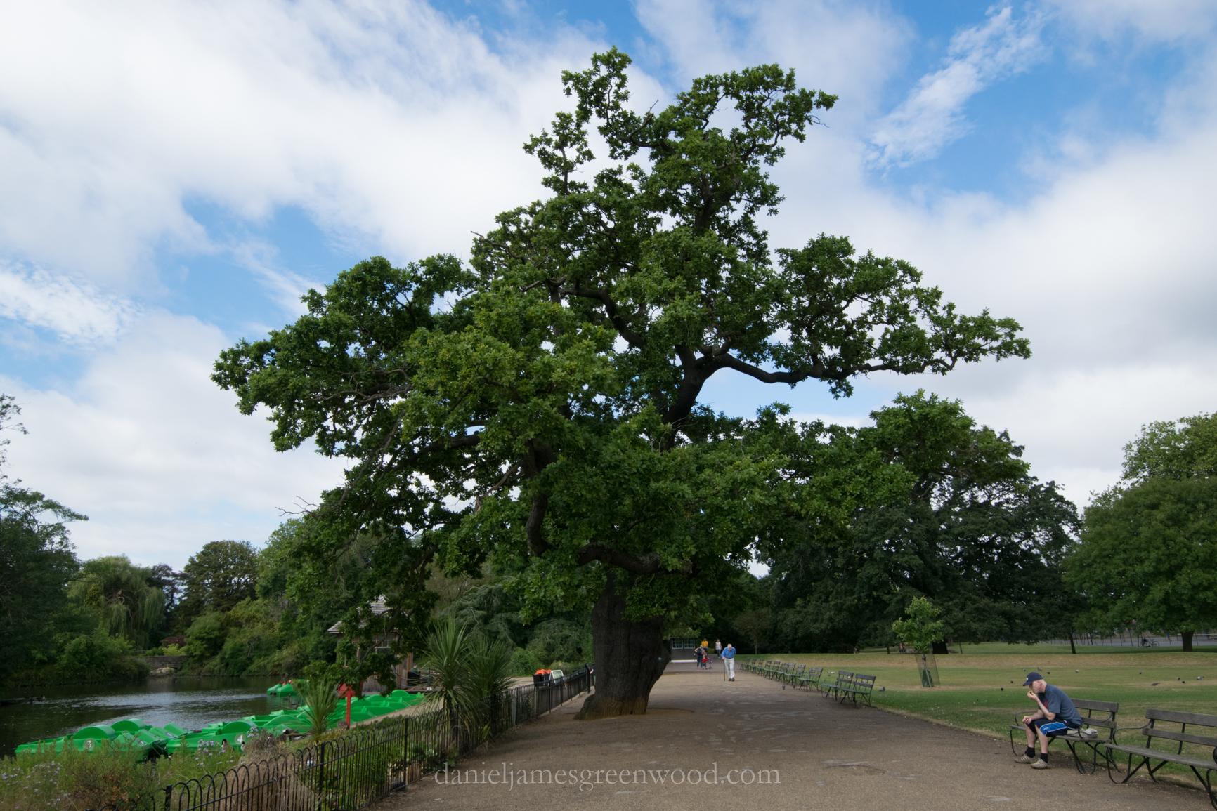 dulwich-park-oaks-22-8-16-lo-res-26
