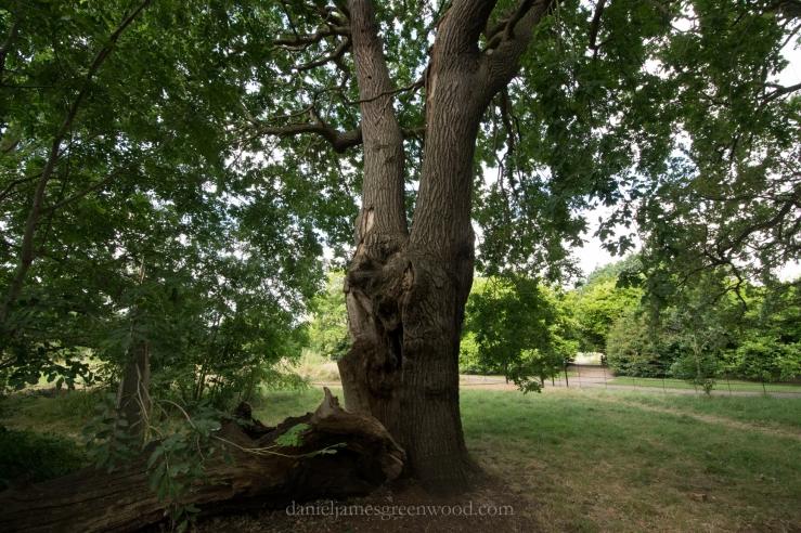 dulwich-park-oaks-22-8-16-lo-res-33