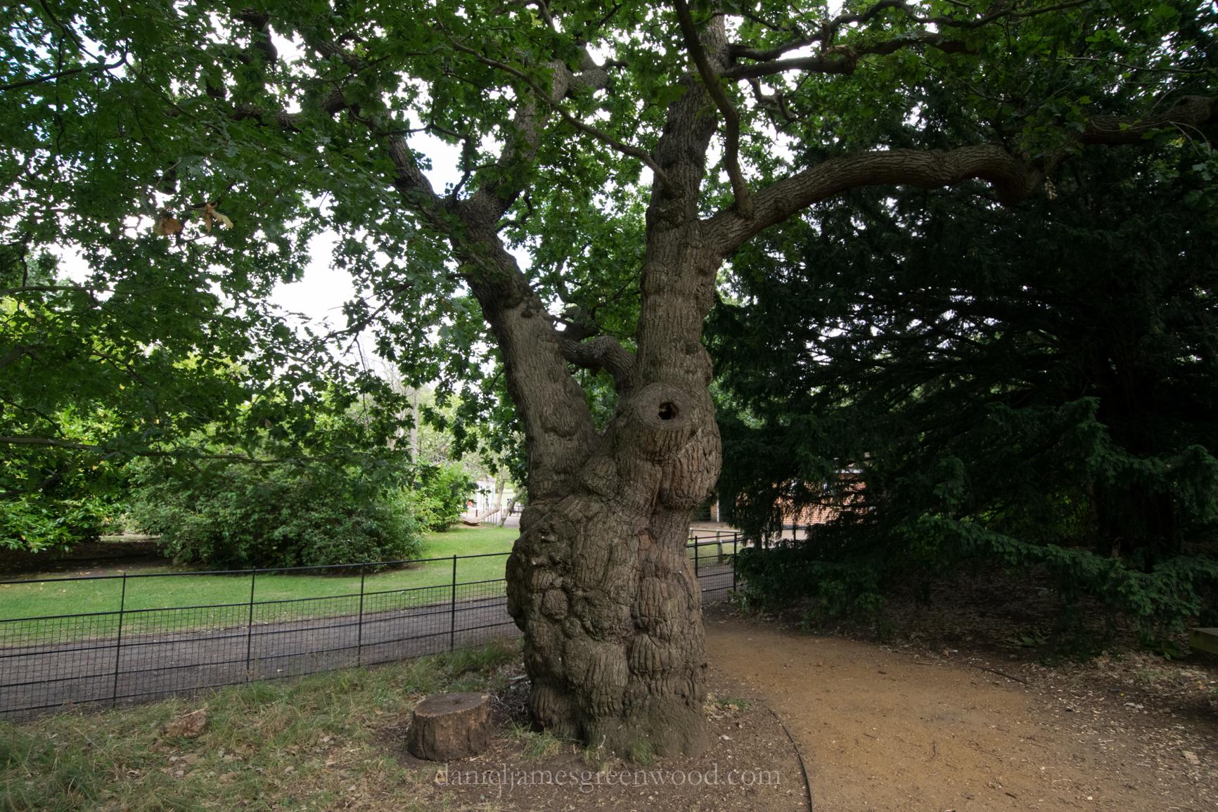 dulwich-park-oaks-22-8-16-lo-res-37
