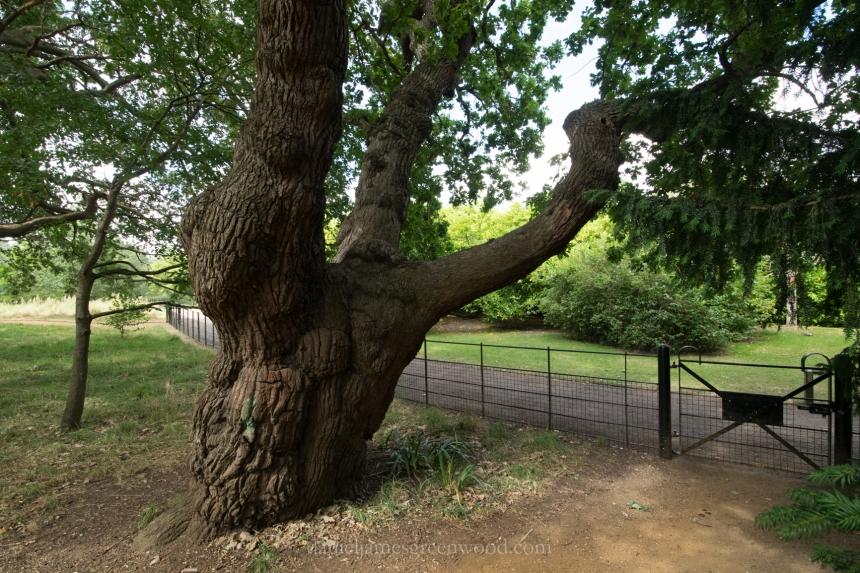 dulwich-park-oaks-22-8-16-lo-res-41