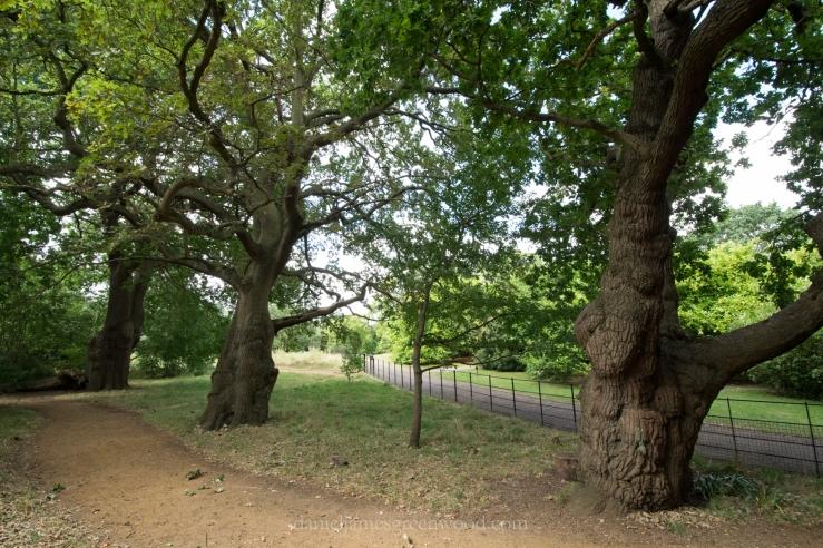 dulwich-park-oaks-22-8-16-lo-res-42