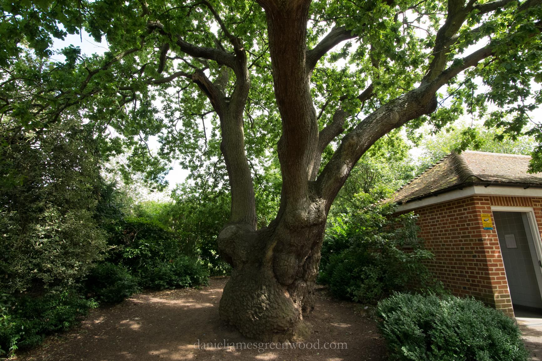 dulwich-park-oaks-22-8-16-lo-res-43