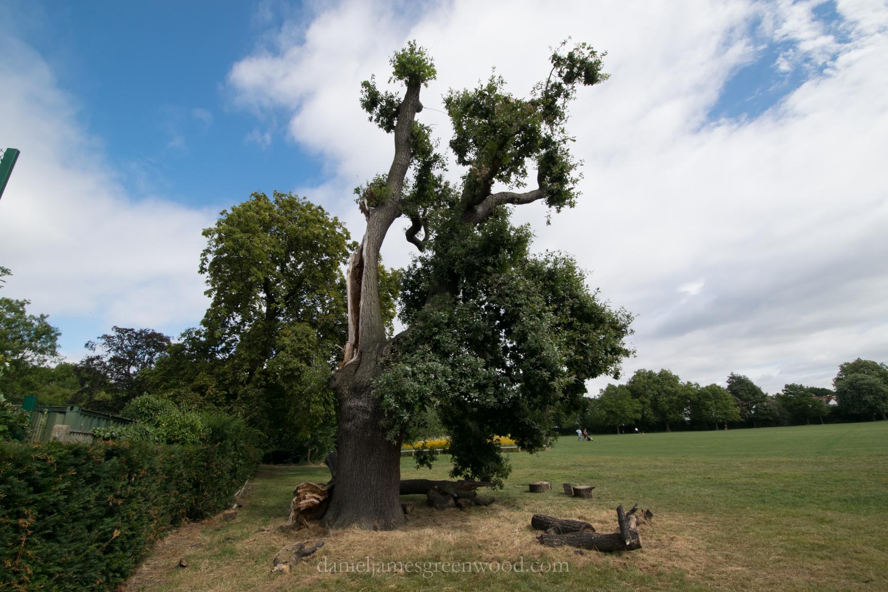 dulwich-park-oaks-22-8-16-lo-res-55