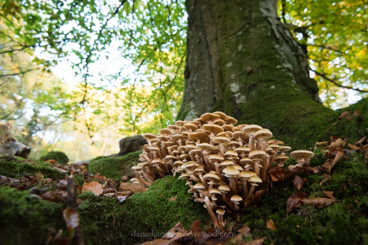 new-forest-october-2016-lo-res-157