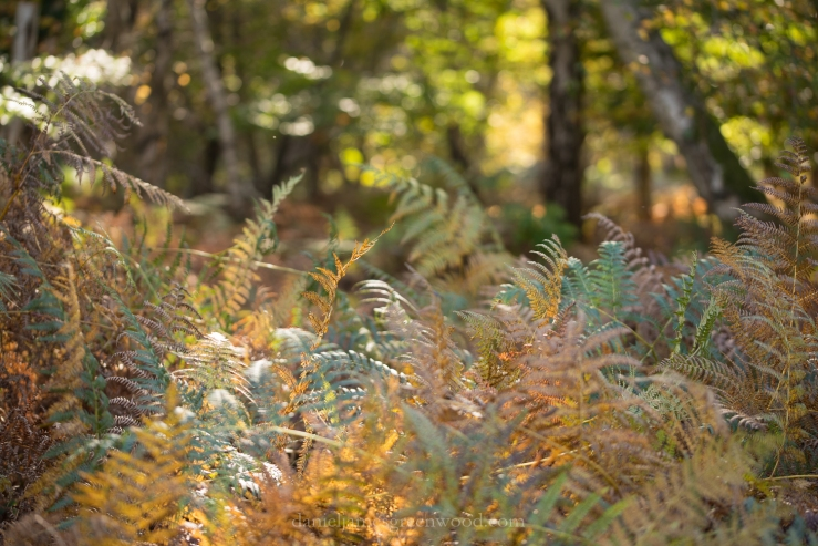new-forest-october-2016-lo-res-41