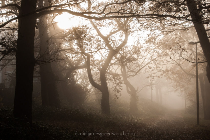 sydenham-hill-wood-coxs-walk-oaks-november-2013-daniel-greenwood-1