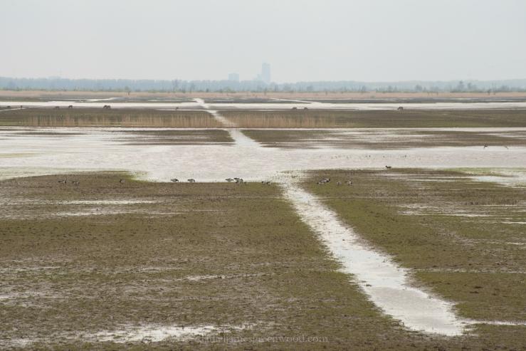 Netherlands 2017 lo-res DJG -5