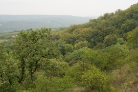 Ancient oak-lime woodland,
