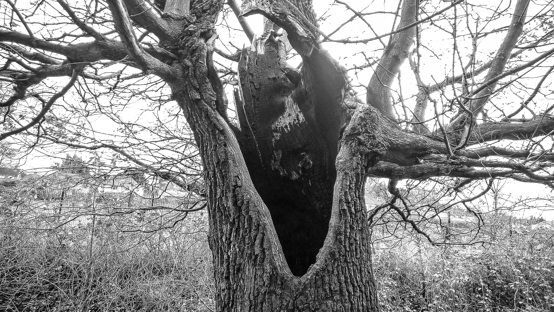 Bexley oaks - March 2017 djg-4