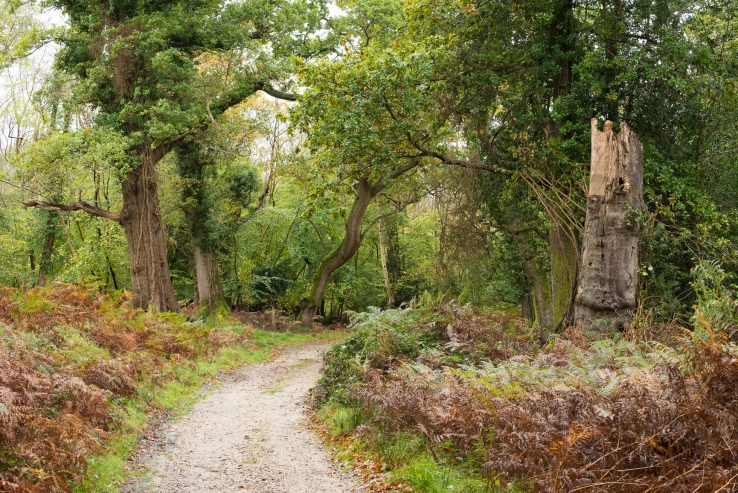 New Forest - 23-10-17 -1 djg (4)