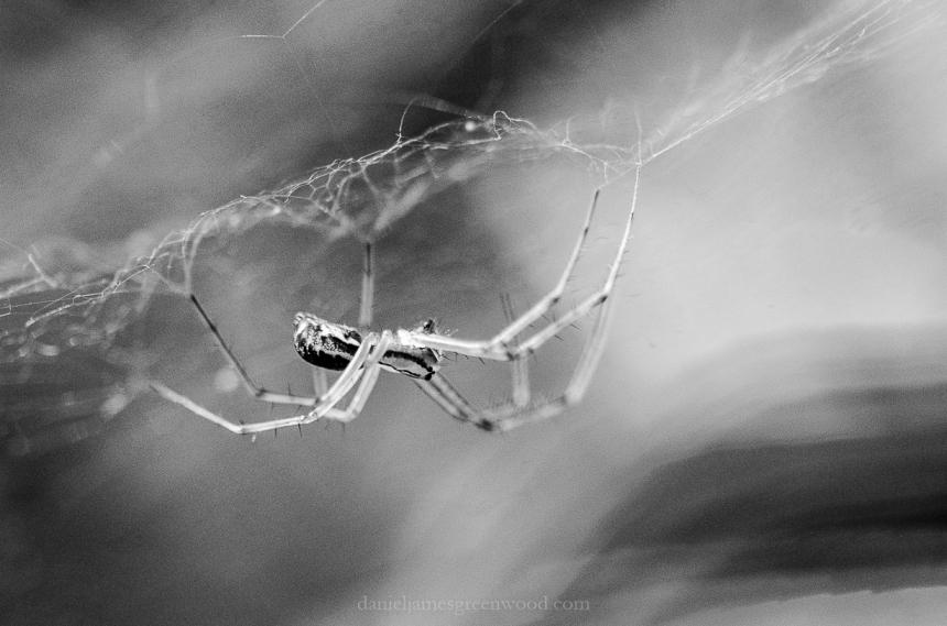 Spider silk-1