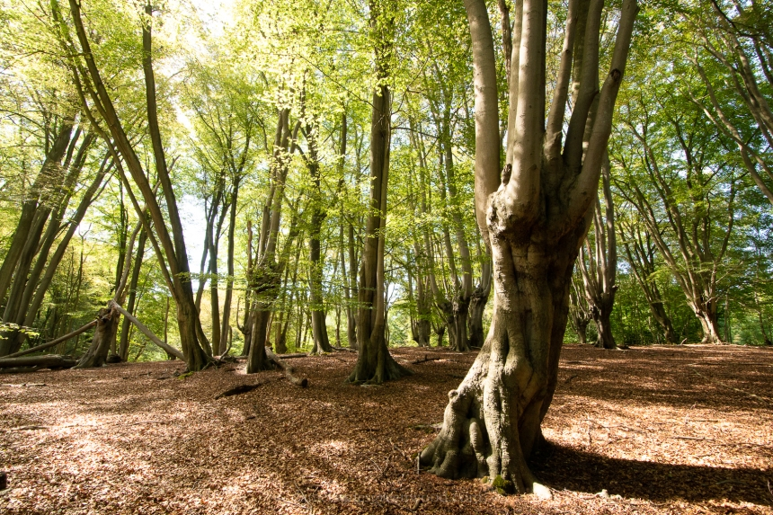 Epping Forest - 11-8-2018 - djg-45