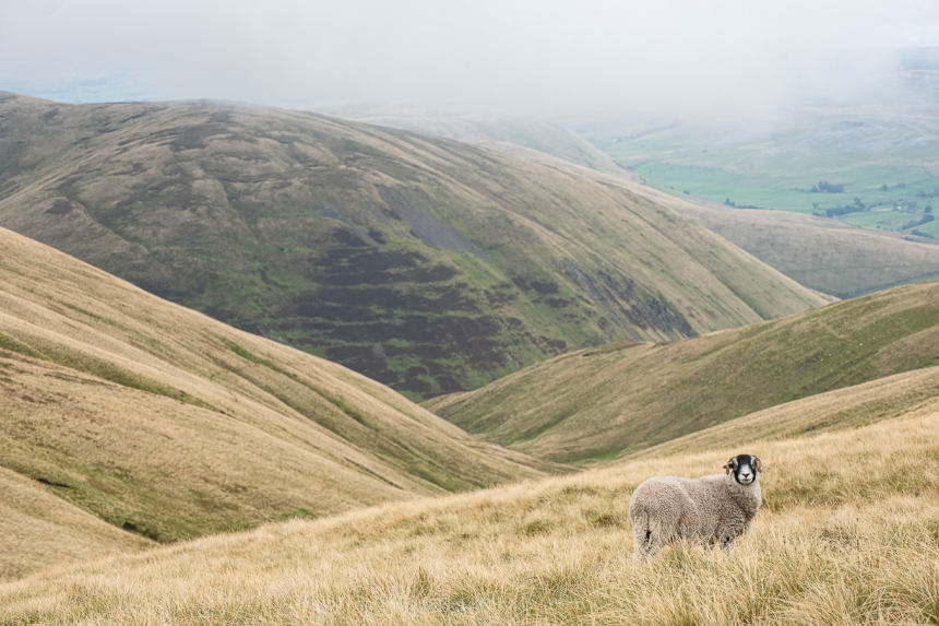 Yorkshire Dales - October 2019 blog-26