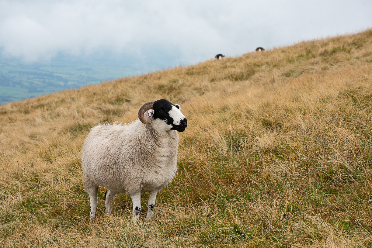 Yorkshire Dales - October 2019 blog-30