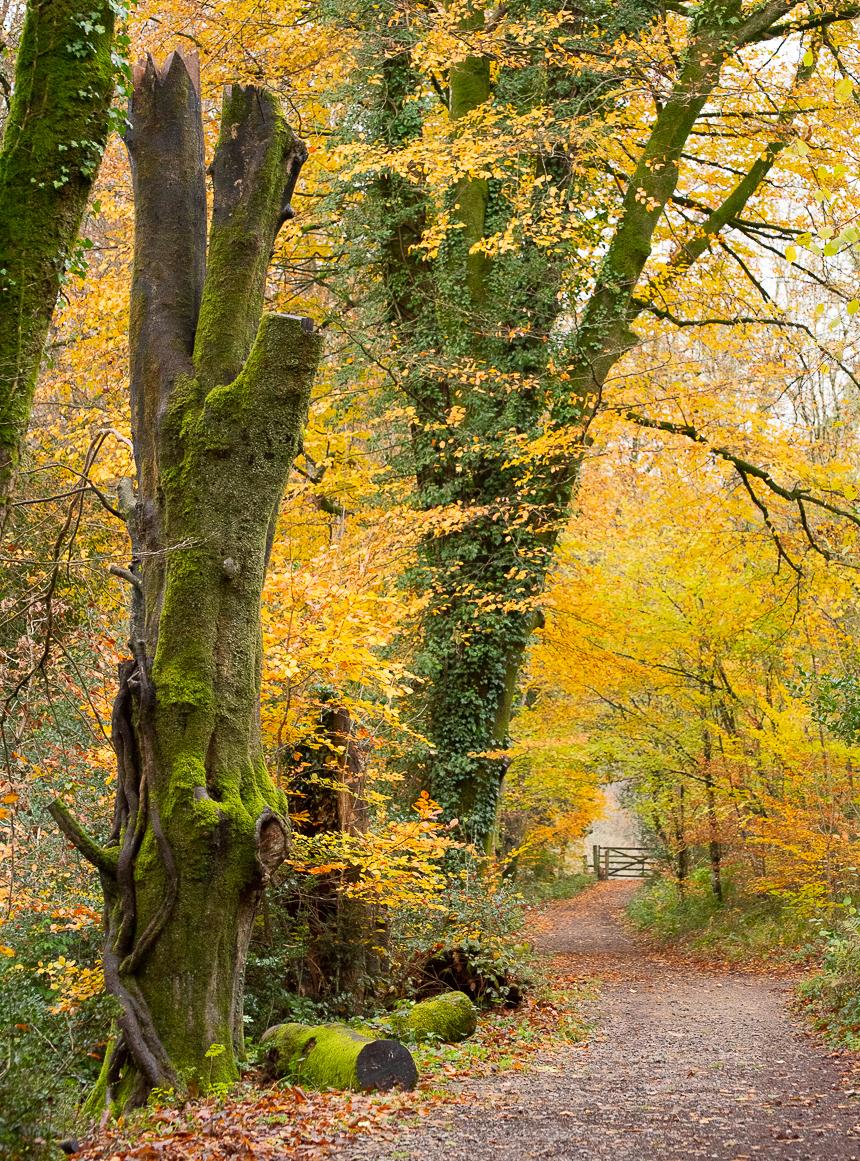 Dartmoor - November 2019 blog-12