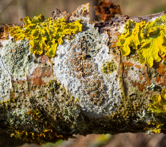 Rother lichens - 5-2-2020 blog-2