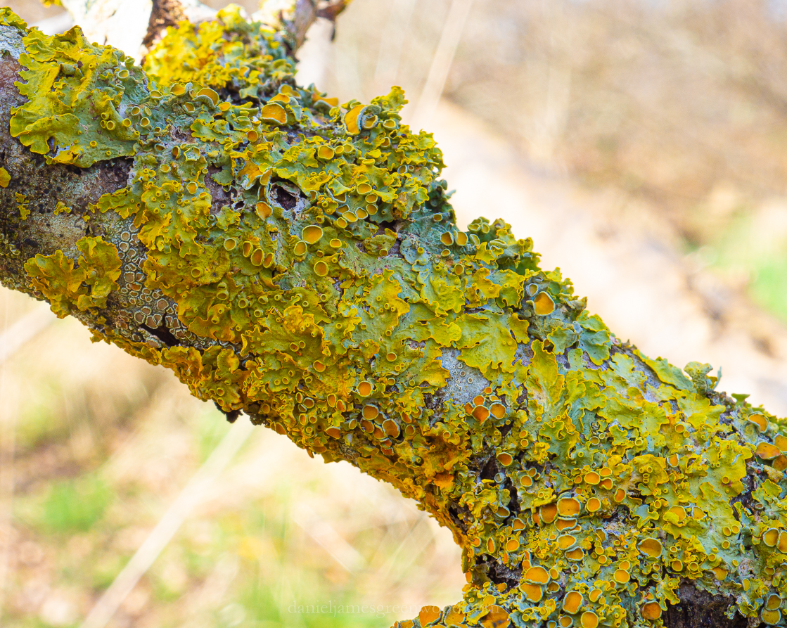 Rother lichens - 5-2-2020 blog-5