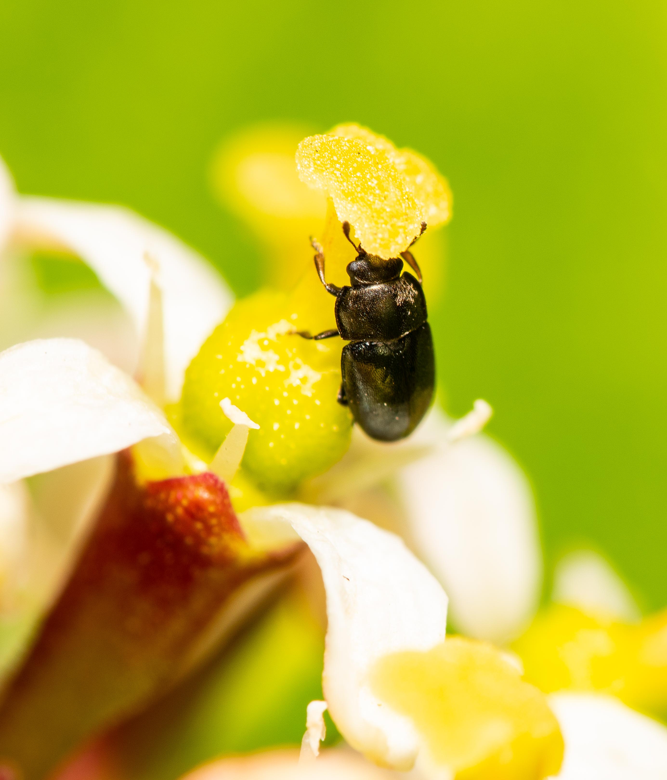 Garden_insects_28-3-2020_lo-res-3