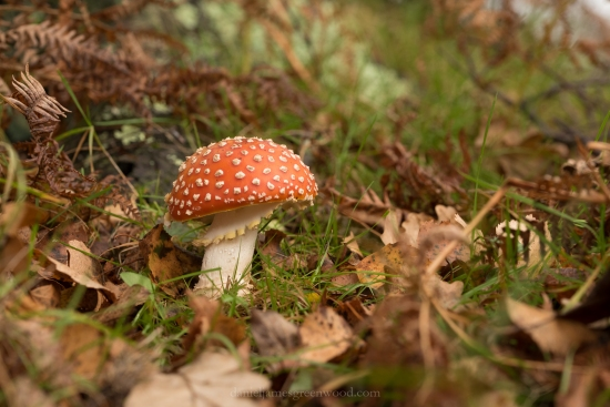 New Forest - 23-10-17 -1 djg (59)