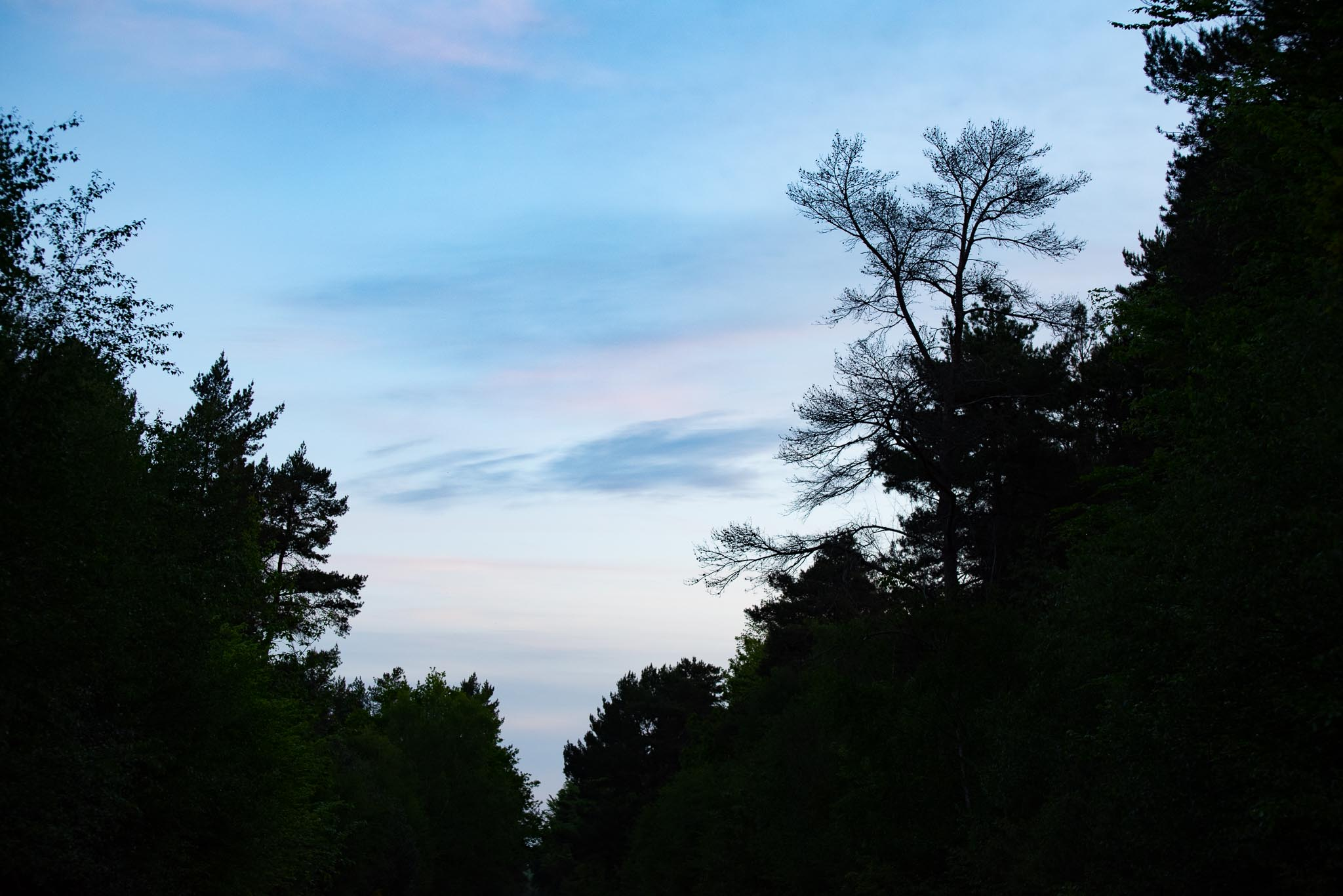Dawn-8-5-2020-lo-res-12