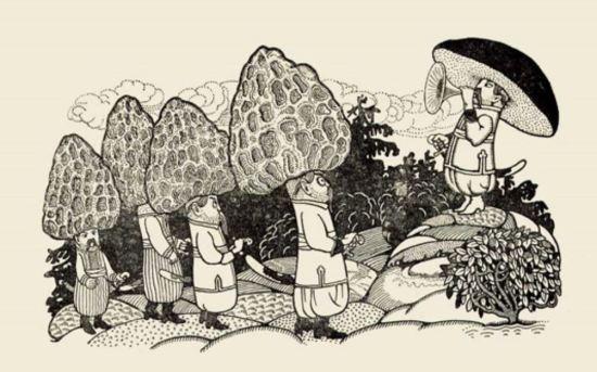 Fungi_at_war_3