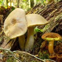 The Sussex Weald: where all the mushrooms are — Daniel Greenwood